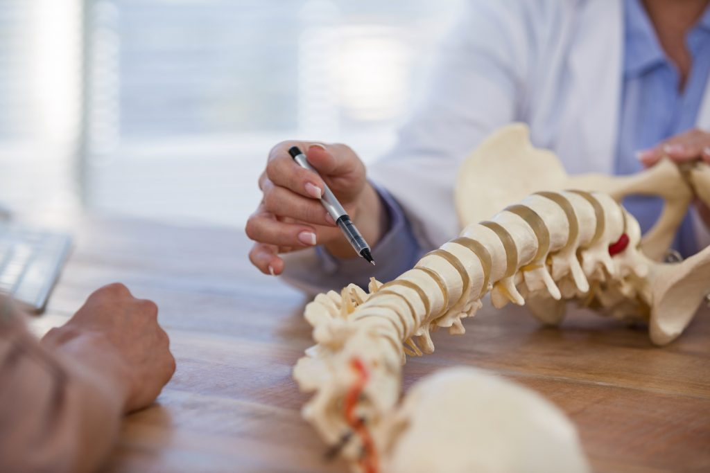 chiropractor showing patient a model of the spine
